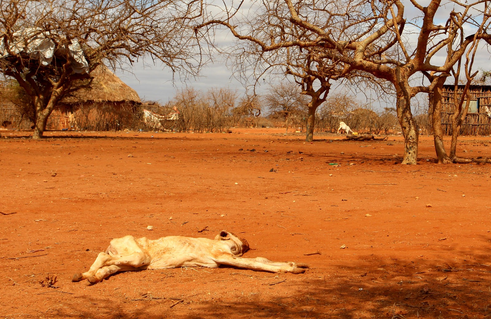 Drought has devastated Kenya, taking its toll on local agriculture and farming